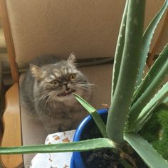 Funny Cat - 25 Pictures – Funnyfoto   Funny Pictures - Videos - Gifs - Page 4