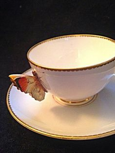 Royal Worcester Butterfly Handle Tea Cup and Saucer | eBay