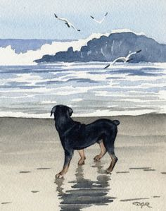 ROTTWEILER Dog Art Print Signed by Artist DJ Rogers