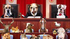 Kampanya · Hayvanların öldürülmesini istemiyorum, Hayvan Hakları Yasası çıksın · Change.org. ARKADAŞLAR-LÜTFEN BU KAMPANYAYI İMZALARMISINIZ.