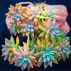 758 отметок «Нравится», 17 комментариев — Zeety (@zeety) в Instagram: «How sweet is this. Just like a succulent bouquet  #succulents #succulent #succulentlover…»