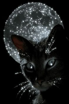 moon and a black cat.love this one Beautiful Cats, Animals Beautiful, Animals And Pets, Cute Animals, Gatos Cool, Image Chat, Halloween Cat, Cat Love, Crazy Cats