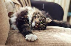 cat-scrathing-furniture