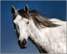 Horse / Rescued mustang