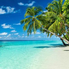 There's only one thing missing from this beach. Do you know what it is?  Mayreau, Grenadines  #awesometraveldestinations #travel #caribbean #beach