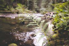 Lost Creek Dandelion, Lost, Flowers, Plants, Photography, Photograph, Dandelions, Fotografie, Photoshoot