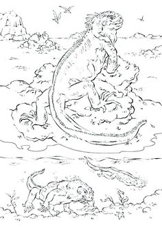 Marine Iguana Coloring Pages Coloring Print Simple Design Iguana
