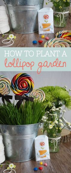 How to plant a lolli