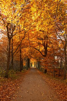 Shared by Cris Figueiredo. Find images and videos about nature, autumn and fall on We Heart It - the app to get lost in what you love. Autumn Scenes, Autumn Aesthetic, Seasons Of The Year, Fall Pictures, Belle Photo, Beautiful Landscapes, Autumn Leaves, Nature Photography, Beautiful Places