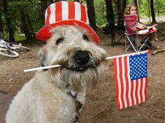 happy patriotic dog