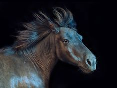 <b>All The Wild Horses is an incredible photo series by photographer Andrew McGibbon.</b>