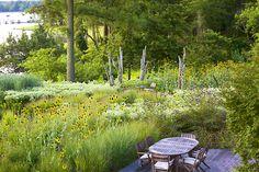 Oehme van Sweden designed, Maryland garden The grey-green plant w/ white flowers is probably pycnanthemum muticum AKA mountain mint. Suspect deer don't like it. Plant Design, Garden Design, Landscape Architecture, Landscape Design, Maryland, Prairie Planting, Fresco, Garden Images, Woodland Garden
