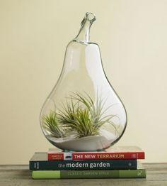 indoor plants :)