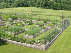 (Wow--that is a big garden but looks managable to?]--// Awesome homesteading garden ideas