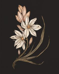 1 Tattoo, Grey Art, Language Of Flowers, Red Accents, Freelance Illustrator, Walking In Nature, Memento Mori, Wow Products, Botanical Illustration