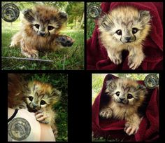 Incredible Fantasy & Realistic Handmade Creatures http://geekxgirls.com/article.php?ID=2821