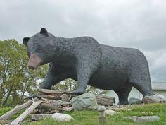 Kapuskasing, Ontario Canada Eh, Visit Canada, Canadian Forest, Capital Of Canada, Canadian History, Roadside Attractions, Travel List, Canada Travel, Black Bear