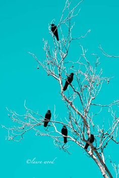 Stunning photo of crows