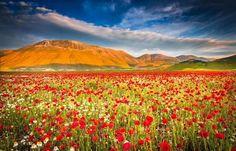 Campos colores- Umbría, Italia