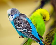 11 animales con espectacular coloración | Perico