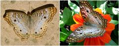 A Collection of Different Beautiful Butterflies | Beyond Wandering