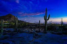 Arizona Photos - Sonoran Desert Saguaro Cactus by Scott McGuire