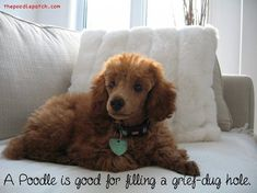 A POODLE IS GOOD FOR FILLING A GRIEF-DUG HOLE
