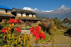 Trekking and Photography in the Himalaya: Approach to the Annapurna Base Camp (ABC) Trek South Col, Trekking, Vineyard, Camping, Mountains, Base, Photography, Travel, Outdoor