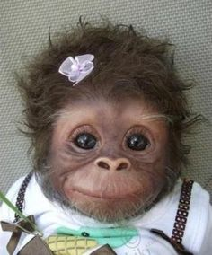 "I keep seeing this as ""Baby monkey"" or ""Cute baby monkey."" -- It definitely is cute, but it's a baby monkey DOLL. This is ""Cookie"" and she's an Amy Ferreira ""Amy's Pipsqueaks"" Reborn doll. (Slide 2 of 19 at the click-through. Cute Baby Animals, Animals And Pets, Funny Animals, Animal Babies, Animals Photos, Wild Animals, Cute Monkey, Monkey Baby, Monkey Girl"