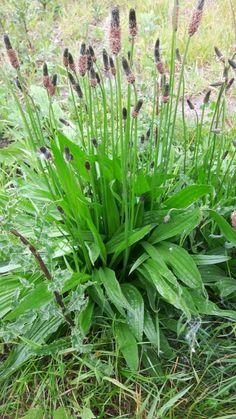 Herb Garden, Home And Garden, Edible Garden, Dream Garden, Permaculture, Garden Planning, Natural Healing, The Cure, Survival