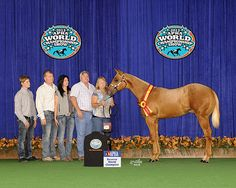Here is Intense I am Winning The Paint horse resv. World Title.