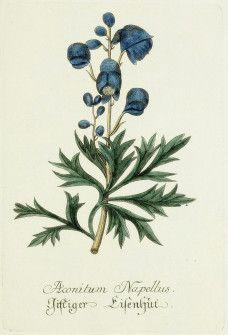 Blue Botanical Image_2