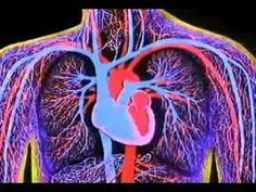 3D ANIMATION OF WORKING OF HEART. Human Anatomy. #homeschool human body. Apologia Anatomy