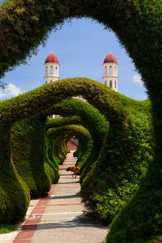 Topiary garden, Zarcero, Costa Rica by Reimar Gaertner Garden Archway, Topiary Garden, Topiary Trees, Garden Art, Great Places, Beautiful Places, Places To Visit, Amazing Places, Amazing Gardens