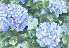 Hydrangea's Watercolor Painting by Huguette Michel at Hortensia House Garden in Blenheim Marlborough New Zealand