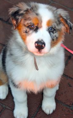 255 Best Calico Dogs And Cats Images