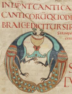 Peacocks kissing in Osculatur – Manuscript Art Medieval Books, Medieval Manuscript, Medieval Art, Celtic Dragon, Celtic Art, Illuminated Letters, Illuminated Manuscript, Wiccan Art, Illumination Art