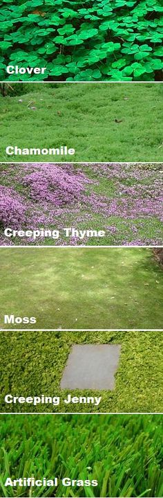 - Ground cover instead of a grass lawn! Better for bees, environment and utility b… Ground cover instead of a grass lawn! Better for bees, environment and utility bill! (SO pretty! No Grass Backyard, Backyard Landscaping, Backyard House, Landscaping Edging, Landscaping Ideas, Landscape Design, Garden Design, Plantation, Garden Projects