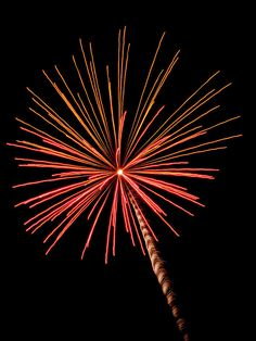 Bi-color Fireworks 2 by Cynthia Woods