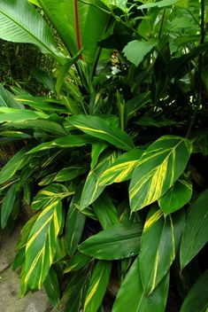 50 Best Tropical Shade Tolerant Plants Images In 2020 Shade