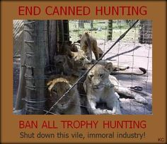 Click on the link above to take part in the Global March agaist canned hunting. Date: 15 March 2014 @ 11am Venue: Cape of Goodhope Castle to Cape Town Parliament www.sunsafaris.com #africa #wildlife #southafrica #lions #bancanned #hunting