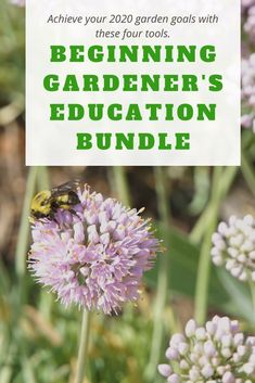 Do you want to grow your own flower garden or plant in containers but you're not sure about plant care? This beginning gardener bundle will fast-track your garden learning and simplify your understanding of the basics of gardening. Winter Container Gardening, Indoor Gardening Supplies, Small Space Gardening, Urban Garden Design, Garden Modern, Container Vegetables, Garden Planters, Balcony Gardening, Planting Bulbs