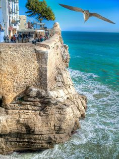 What a view from the top onto the clear , green waters.. but even more amazing a tree is growing at the top of the cliff and an owl flies overhead.(during the day no-less)Peñiscola, a seaside town located on the Costa del Azahar, near Valencia - Spain
