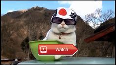 😸 Funny Cats Try not to Laugh or Grin Challenge 😼 Funny and Cute Cats Up your Happiness with these videos Blow the Monday Blues away Start…