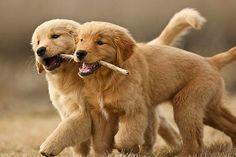 Dişileriyle oyun oynayan erkek enikler, fiziksel üstünlük onlarda olsa bile dişilerin kazanmasına izin verirler :)