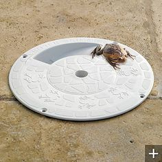A critter skimmer so the frogs and lizards can get out of my pool before drowning.  Love it!
