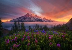 spring in the pacific northwest photographed by marc adamus