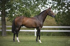 Hickstead. <3 many people's dream horse. RIP buddy.