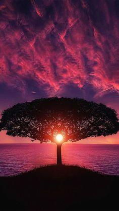 Sea Tree Purple Sky Nature #iPhone #6 #wallpaper