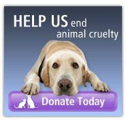 End Animal Cruelty